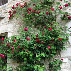 Association Grignan Pierres et Roses anciennes